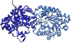 PTE molecule