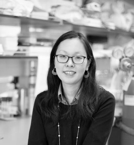 Jin Kim Montclare, PhD