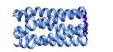 q Protein